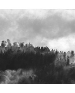 Bushboard Vista Hazy Forest Midway Splashback - Acrylic - 3000mm x 600mm x 4mm